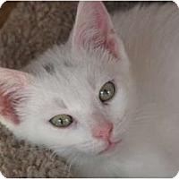 Adopt A Pet :: Deuce - Port Republic, MD