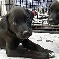 Adopt A Pet :: Tanner - Philadelphia, PA