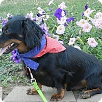 Adopt A Pet :: COLE - Portland, OR