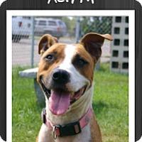 Adopt A Pet :: Aerith - Grand Rapids, MI