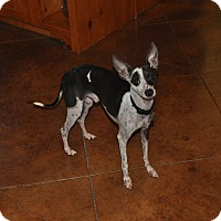 Adopt A Pet :: Jarek in DFW - Argyle, TX