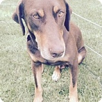 Adopt A Pet :: Gerry - Torrance, CA