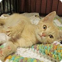 Adopt A Pet :: LJ - Acme, PA