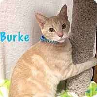 Adopt A Pet :: Burke - Foothill Ranch, CA