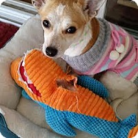 Adopt A Pet :: Brisa - Westminster, MD