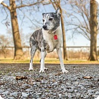 Adopt A Pet :: Nyla - Enfield, CT