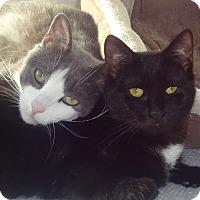 Adopt A Pet :: BRANDALIE&POMMEROY- TRUE LOVE - New York, NY
