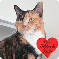 Adopt A Pet :: Bridgett - San Leon, TX