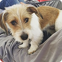 Adopt A Pet :: Carl - Tucson, AZ