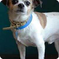 Adopt A Pet :: Yappy - Waldorf, MD