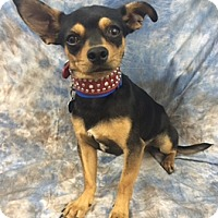 Adopt A Pet :: Milo - Lake Elsinore, CA