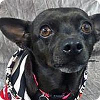 Adopt A Pet :: Maya - Wildomar, CA