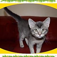 Adopt A Pet :: Chardonnay - Mt. Prospect, IL