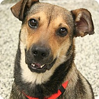 Adopt A Pet :: Iris - Cranston, RI