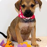 Adopt A Pet :: Buttercup - Glastonbury, CT