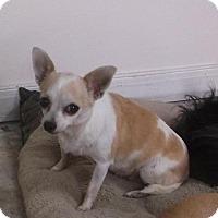 Adopt A Pet :: Penny - Bonifay, FL