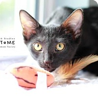 Adopt A Pet :: Emily - Edwardsville, IL