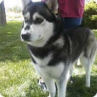 Adopt A Pet :: Miranda- Adoption pending! - Monument, CO