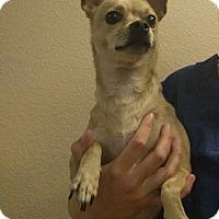 Adopt A Pet :: Leia - Oviedo, FL