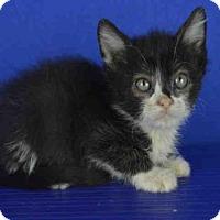 Adopt A Pet :: A025057 - Norman, OK