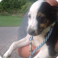 Adopt A Pet :: Levey - Kendall, NY