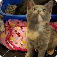 Adopt A Pet :: Gypsy - Kenosha, WI