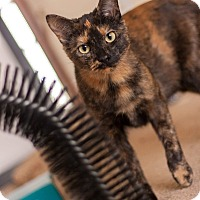 Adopt A Pet :: Addy - Manitowoc, WI