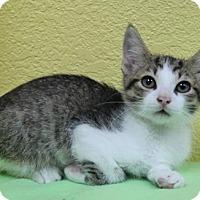 Adopt A Pet :: Elvis - Benbrook, TX