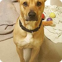 Adopt A Pet :: Copper - Bellingham, WA
