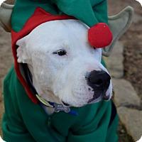 Adopt A Pet :: BENTLEY - Harrisburg, PA