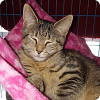 Adopt A Pet :: Lonnie - Indianapolis, IN
