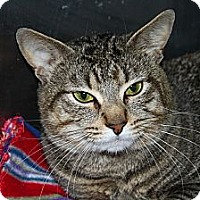Adopt A Pet :: Couscous - North Branford, CT