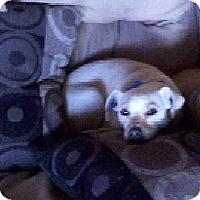 Adopt A Pet :: Nena - San Diego, CA