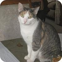 Adopt A Pet :: Dreama - Leamington, ON