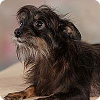 Adopt A Pet :: Axel - Westport, CT
