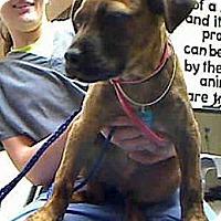 Adopt A Pet :: Chadwick - Antioch, IL