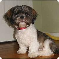 Adopt A Pet :: Archie - Mooy, AL
