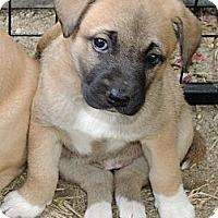 Adopt A Pet :: Willow - La Habra Heights, CA