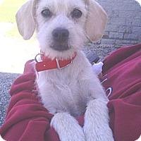 Adopt A Pet :: Tyler - Rockaway, NJ