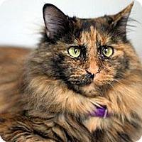 Adopt A Pet :: Rory - Alexandria, VA