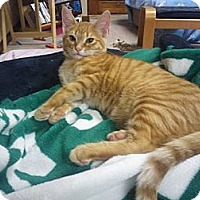 Adopt A Pet :: Grover - West Dundee, IL