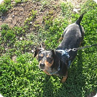 Adopt A Pet :: Buddy - Lyndon, KS