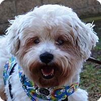 Adopt A Pet :: Cali - La Costa, CA