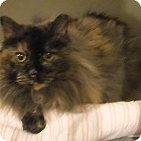 Adopt A Pet :: Lili - Edmonton, AB