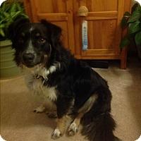 Adopt A Pet :: Sidney - Elk River, MN