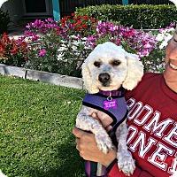 Adopt A Pet :: Charlie is very sweet! - Redondo Beach, CA