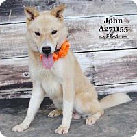 Adopt A Pet :: JOHN - Conroe, TX