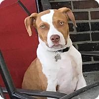 Adopt A Pet :: Snoop Dogg-Adopted! - Detroit, MI