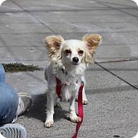 Adopt A Pet :: Petra - San Francisco, CA