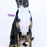 Adopt A Pet :: Trina - Bloomington, MN
